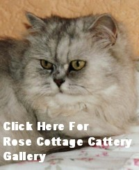 Rose Cottage Cattery Gallery