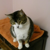 Its nice at the Rose Cottage Cattery