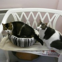 Family Room at Rose Cottage Cattery
