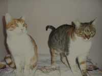 Twin units at Rose Cottage Cattery